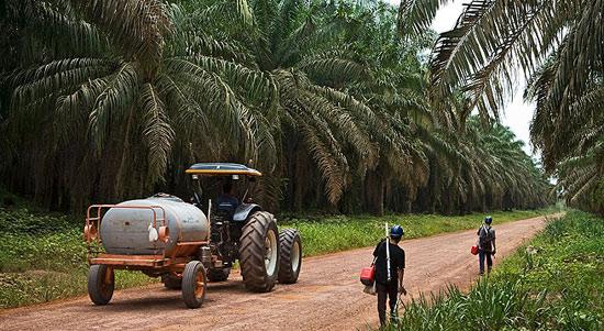 Trabalhadores da Agropalma. Foto de Luiz Maximiano